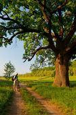 Young traveler with bicycle and camera looking at huge oak beside the country road on sunny spring day — Stock Photo