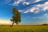 Landscape painting showing lonely tree on the meadow on beautiful spring day — Stock Photo