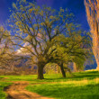 Landscape painting showing huge trees, meadow and the old road — Stock Photo #8188998