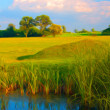 Landscape painting showing reed in the water, wast meadow and trees — Stok fotoğraf