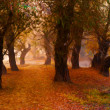 Landscape painting showing forest on the foggy autumn day — Stock Photo
