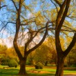 Landscape painting showing detail of the beautiful park in the autumn — Stock Photo