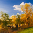 Landscape painting showing flooded forest, grass and blue sky — Stock Photo