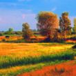 Landscape painting showing cultivated land and trees on sunny summer day — Foto de Stock