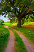 Landscape painting showing country road that leads beside huge oak tree — Stock Photo