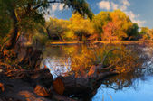 Landscape painting showing cut down tree at the shore of the river — Stock Photo