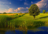 Landscape painting showing vast meadow, channel and the tree — Stock Photo