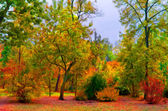 Landscape painting showing colorful deep forest on cloudy autumn day — Stock Photo