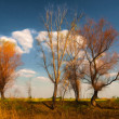 Landscape painting showing burned and dry trees on the field — Stock Photo #8231386