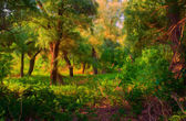 Landscape painting showing colorful forest on sunny day — Stock Photo