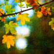 Art grunge background showing colorful autumn leaves in the park — Stock Photo #8287518