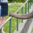 Elephant begging for food in zoo — Stock Photo #8314182