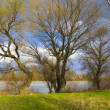 Stock Photo: Beautiful riverbank landscape with green grass, trees and blue sky full of