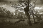 Autumn evening in the wild in black and white — ストック写真