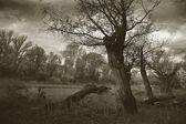 Noche de otoño en la naturaleza en blanco y negro — Foto de Stock
