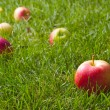 Beautiful red-yellow apples scattered on the fresh green grass — Stock Photo