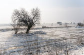 Snowy winter day in the meadow — Stock Photo