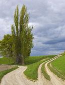 Curvy, dusty road runs between gigantic oak and very tall tree — Stock Photo