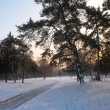Beautiful winter landscape showing park in the snow — Stock Photo