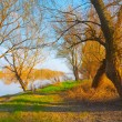 Stock Photo: Beautiful riverbank landscape with green grass, trees