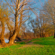Stock Photo: Beautiful riverbank landscape with green grass, trees and blue sky