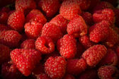 Fresh red raspberries up close — Stock Photo