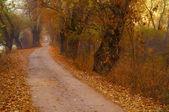Kleine weg leidt diep in het oude forest — Stockfoto