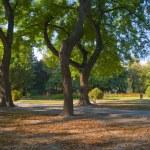 Beautiful autumn evening in the park — Stock Photo