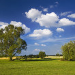 Lonely tree stands in the meadow. It is a sunny day with blue sky — Stock Photo