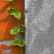 Yellow green vine climbs the red brick wall - Stock Photo