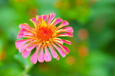 Beautiful pink and purple flowers — Stock Photo