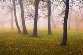 Fog in the forest — Stock Photo