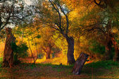 Landscape showing beautiful colorful park in the autumn — Stock Photo