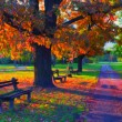 Landscape painting showing beautiful sunny autumn day in the park — Stock Photo