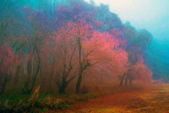 Landscape painting showing forest trees on misty autumn morning — Stock Photo