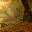 Creepy landscape painting showing remains of old forest on misty autumn day — Stock Photo