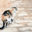 Stray cat — Stock Photo