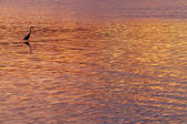 夕阳的颜色,带有苍鹭剪影 — 图库照片