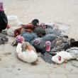 Abused animals on Tunisian market — Stock Photo