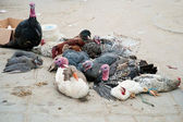 Abused animals on Tunisian market — Photo