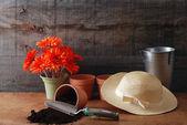 Garten-ringelblume stilleben — Stockfoto