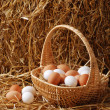 Eggs in a basket - 图库照片