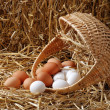 Stock Photo: Spilled basket of eggs
