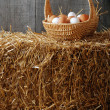 Basket with brown and white eggs — Stock Photo