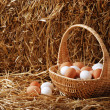 Stock Photo: Brown and white eggs in a basket
