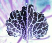 抽象的な葉のテクスチャ パターン — ストック写真