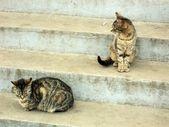 Dvě kočky na schodech — Stock fotografie