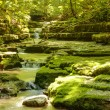 Stream in the forest - Foto de Stock
