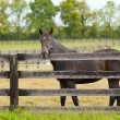 Horse on a farm - Foto Stock