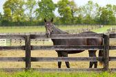 Horse on a farm — Stock Photo